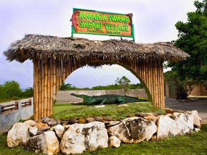 Swamp Safari