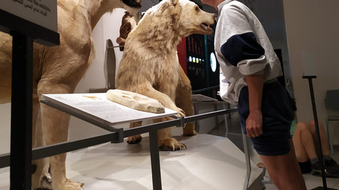 Documentaion of the workshop with Michal Samama at the Steinhardt Museum of Natural History