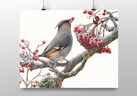 """""""Waxwing"""" Limited Edition Print"""
