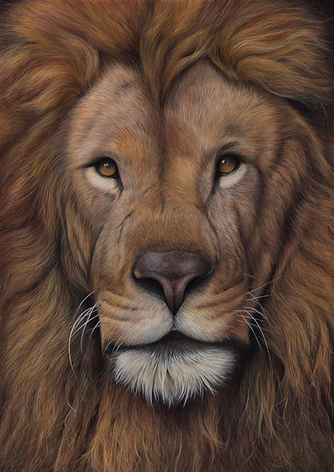 Male Lion Original Drawing