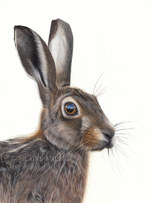 'Humphrey'Hare Limited Edition Print