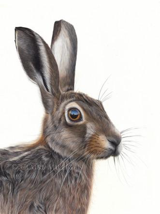 Humphrey - Brown Hare