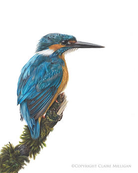 Kingfishersmall.jpg