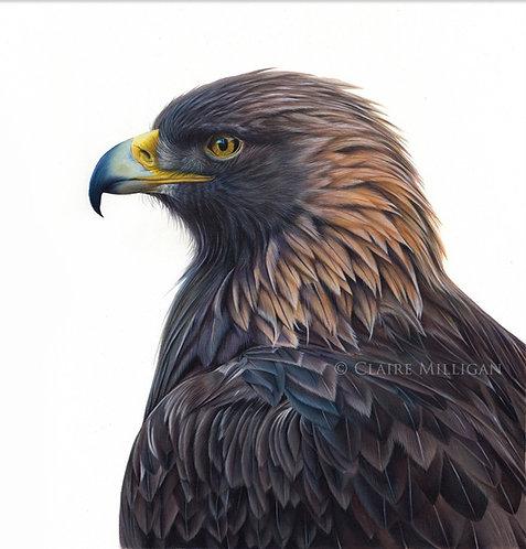 'Golden Eagle' Limited Edition Fine Art Print