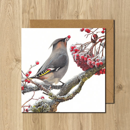Pack of 5 - Waxwing Greeting Cards