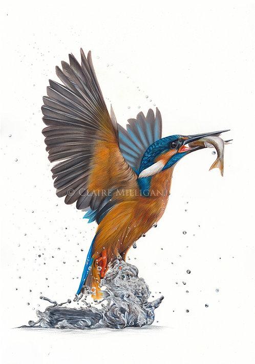 'Kingfisher in Flight' Limited Edition Fine Art Print