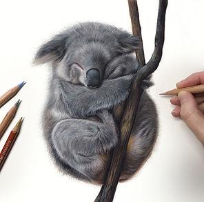 Koala wip 3.jpg