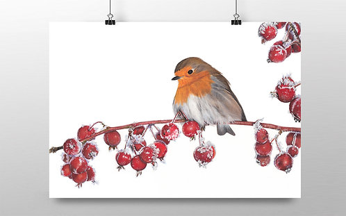 Robin 'Amid Frosty Crabs' Limited Edition Print