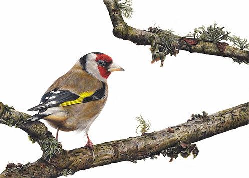 Goldfinch Original Drawing