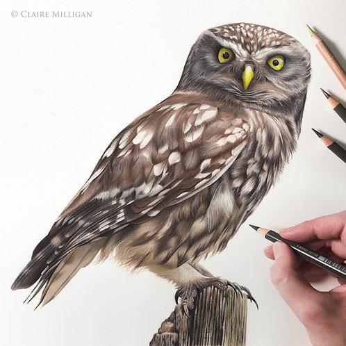 Little Owl Original Drawing