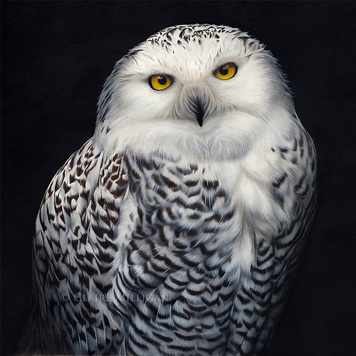 'Snowy Owl' Limited Edition Fine Art Print