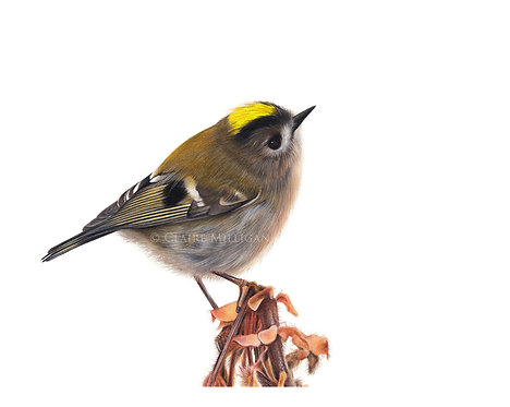 'Goldcrest' Limited Edition Print