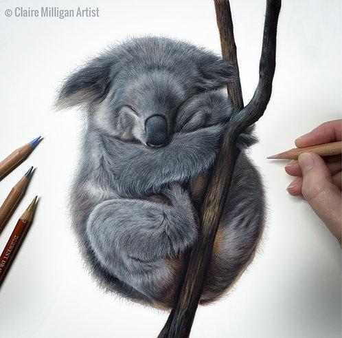 'Koala' Limited Edition Print
