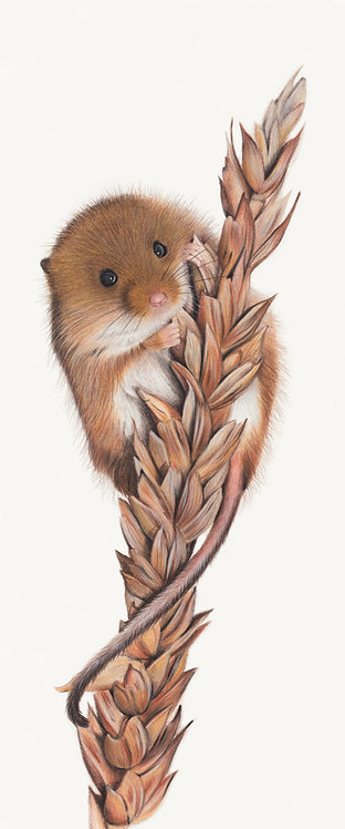 'Nibbles' Harvest Mouse Limited Edition Print