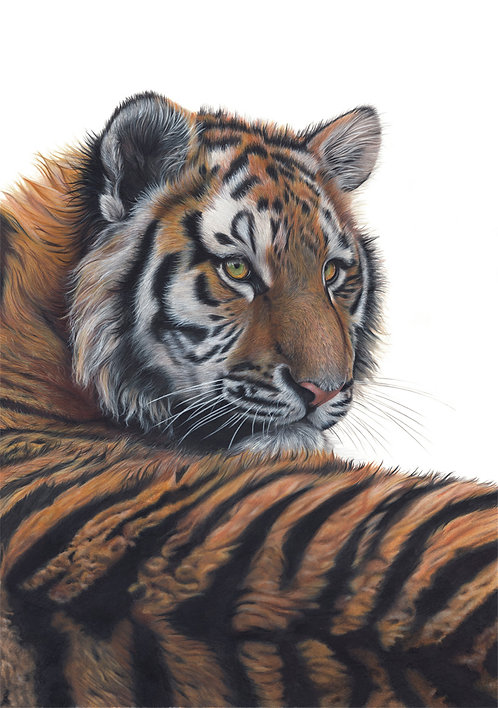 'The Glance' Tiger Limited Edition Print