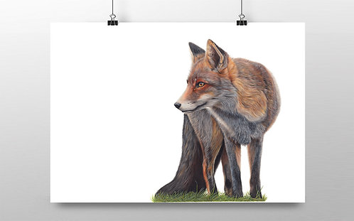'Red Fox' Limited Edition Print