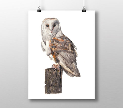 'Sage' Barn Owl Limited Edition Print