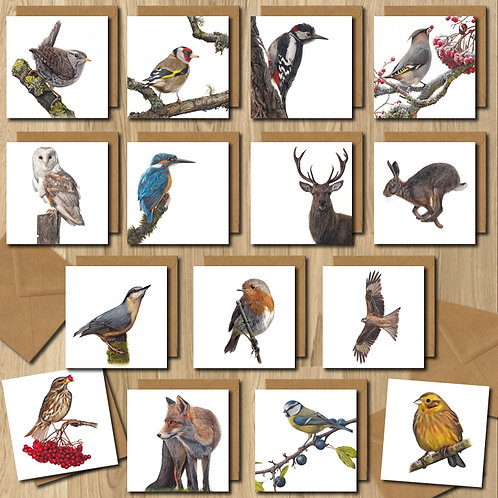Random Pack of 5 Greeting Cards