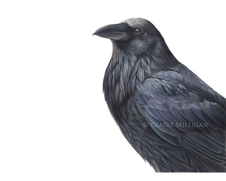 'Raven' Limited Edition Print