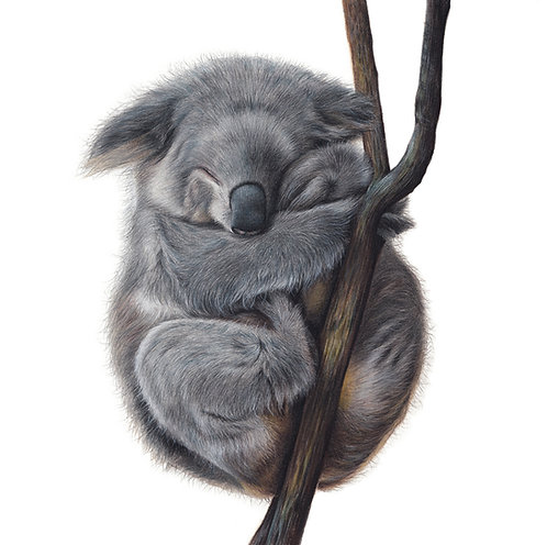 Koala Original Drawing