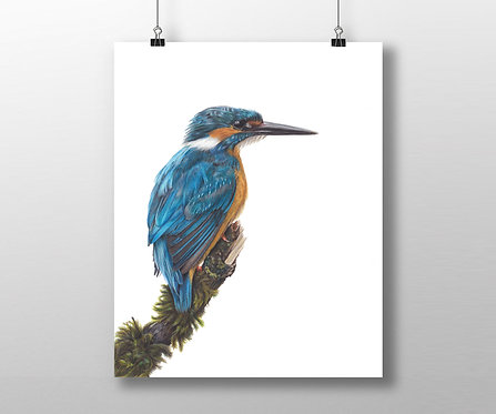 Kingfisher 'Little Blue' Limited Edition Print