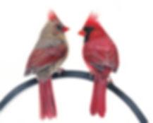 Cardinalduo.jpg