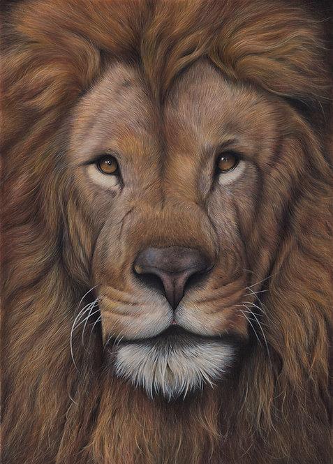 'Lion' Limited Edition Fine Art Print