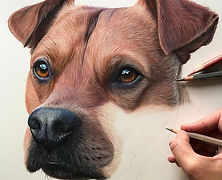 Drawing a dog's nose and fluffy moustach