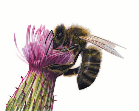 'Honey Bee' Limited Edition Print
