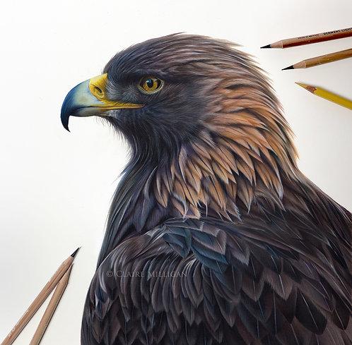 Golden Eagle Original Drawing