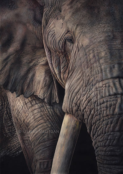 Elephant adj adj.jpg