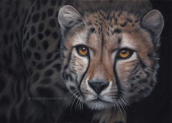 Cheetah online.jpg