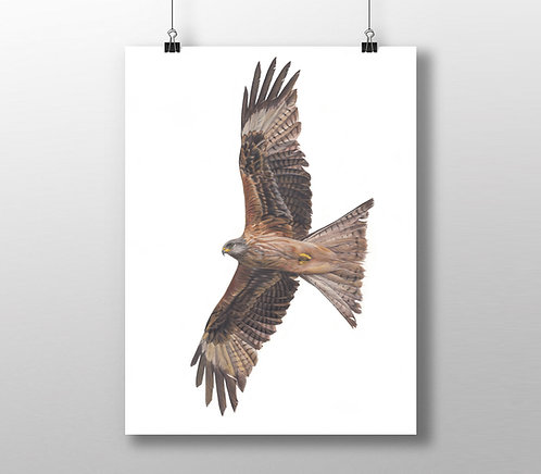 'Red Kite' Limited Edition Print