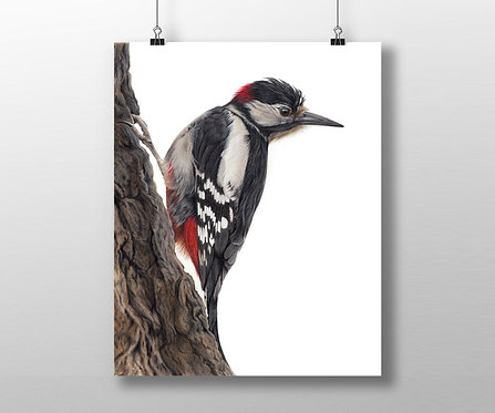 'Woody' Great Spotted Woodpecker Open Edition Print