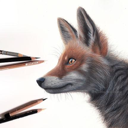 fox profile final.jpg