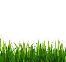 Landscaping 3.jpg