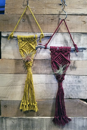Forget Me Knots Macrame Color Small Wall Air Plant Hanger
