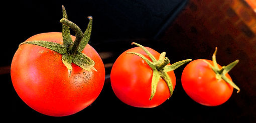 Tomatoes Photoshopped