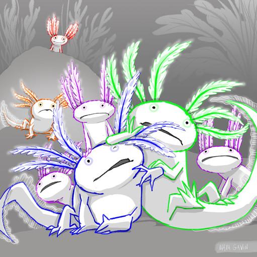 Axolotl yoot MG.jpg