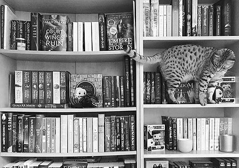 bookish, cats and books, bookish things, pretty, beautiful, bookshelf, bookshelves