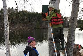 Travaux de suivi des nichoirs pour les canards arboricoles