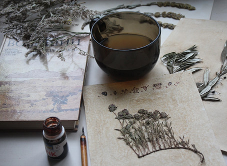 Про Крим з любов'ю. Ботанічні історії від Юлії Красиленко