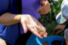 жаби, липень.jpg