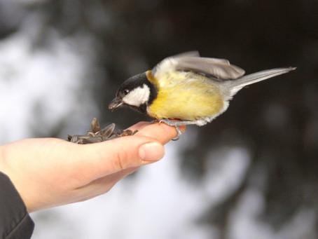 Як годувати птахів з рук?