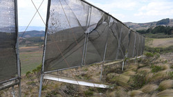 first generation of fog nets (destroyed by wind)
