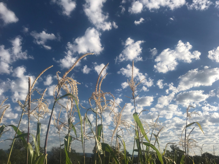 Blue Corn Sky