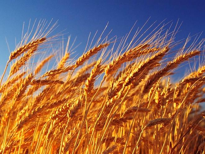 Harvest Takes Work