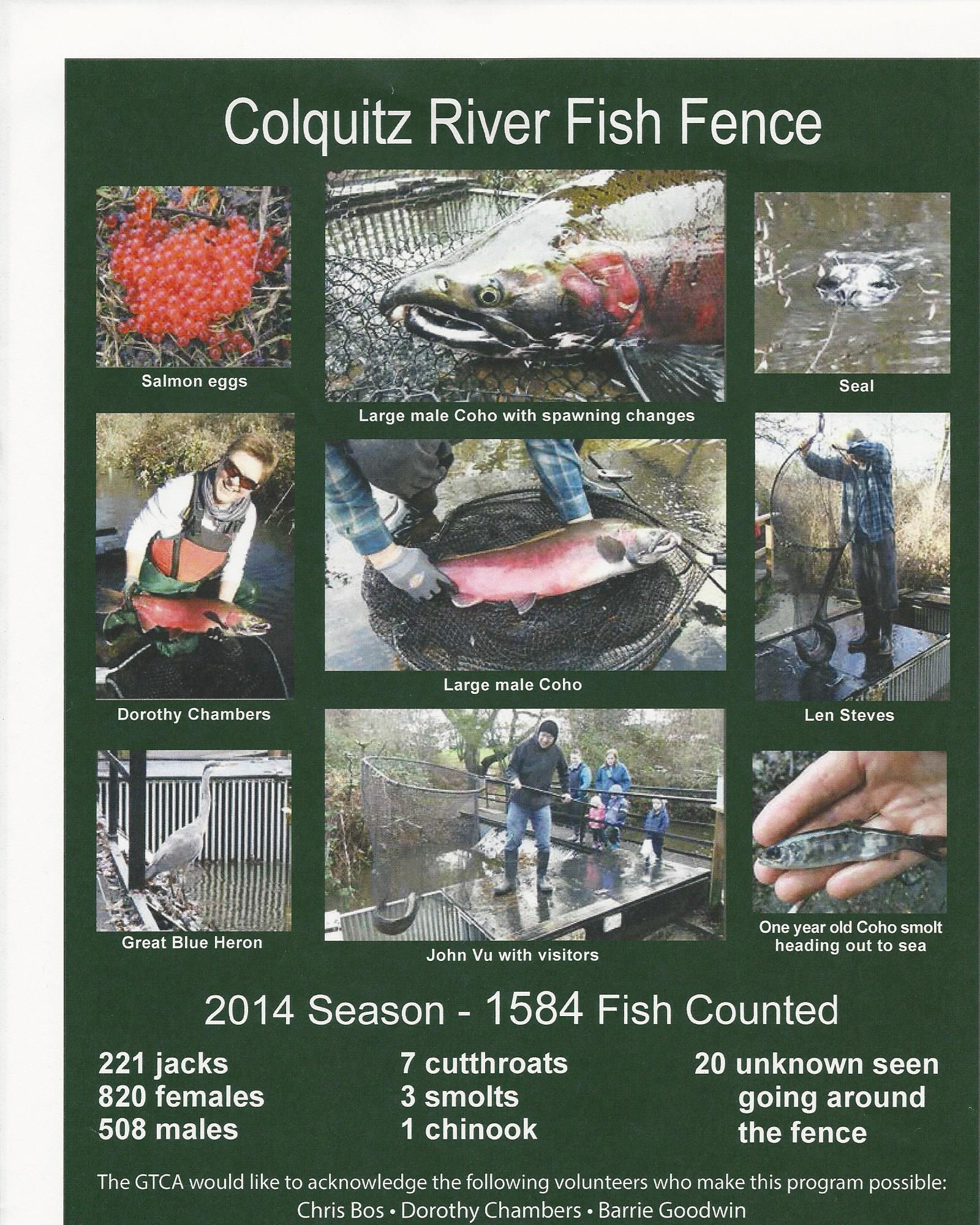 Colquitz Salmon  April  2015