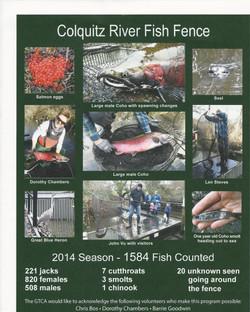 Colquitz Salmon  April  2015