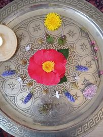 fleurs-de-bach-elixirs-floraux-49-maine-et-loire